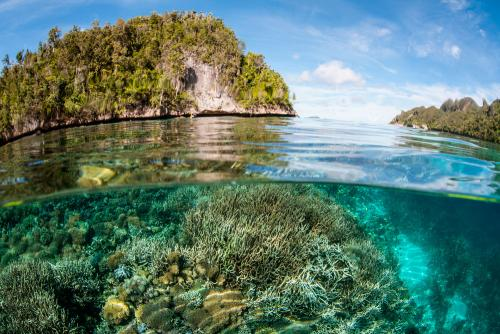 Salvar la biodiversidad de la Tierra con el Acuerdo Global por la Naturaleza