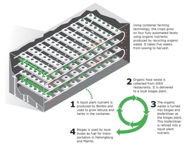 IKEA ahora cultiva lechuga con la ayuda de Bonbio