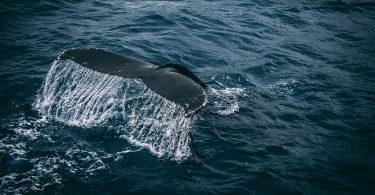 salvando los océanos