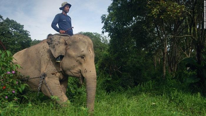 1 millón de especies en peligro de extinción... y los humanos la pagarán
