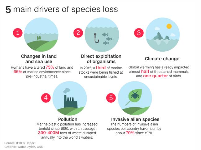 Causas por las que las especies estan en peligro de extinción
