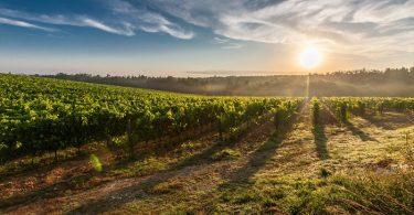 Qué tiene que ver tu amor por el vino y el cambio climático