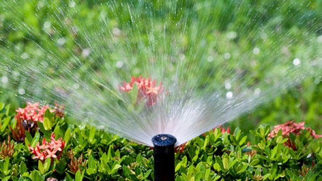Guía para la conservación del agua en el patio o jardín