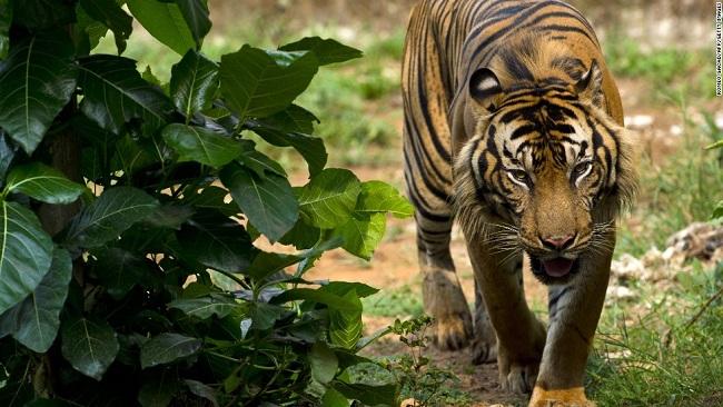 Hallazgos del reporte de las Naciones Unidas sobre especies en peligro de extinción