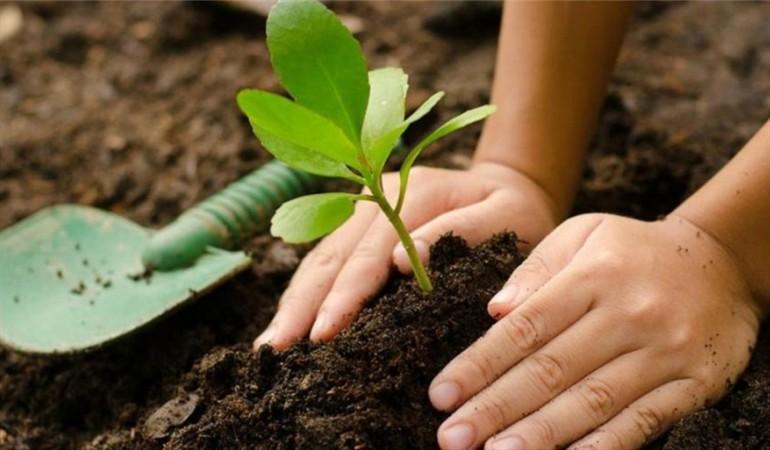 Todos podemos plantar árboles con esta sencilla guía.