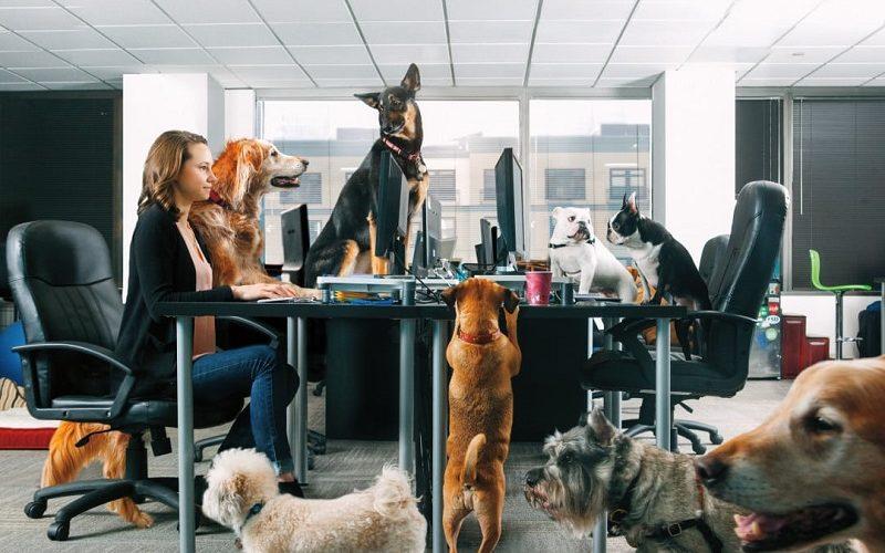 ¿Por qué ser una oficina Pet Friendly?