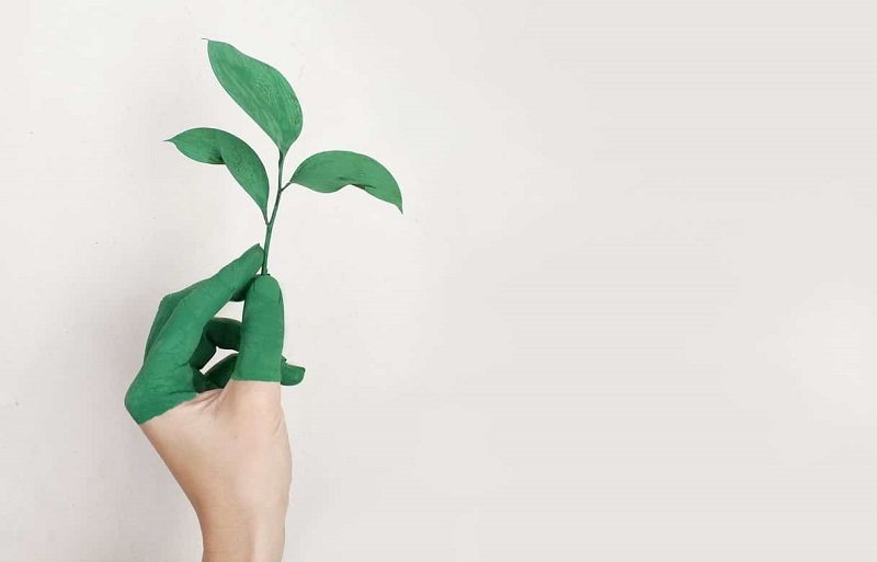 Qué es un Chief Sustainability Officer (CSO)