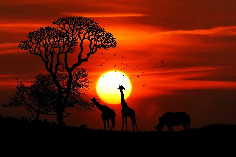 ¿Se debe implementar el bienestar animal en los ODS?