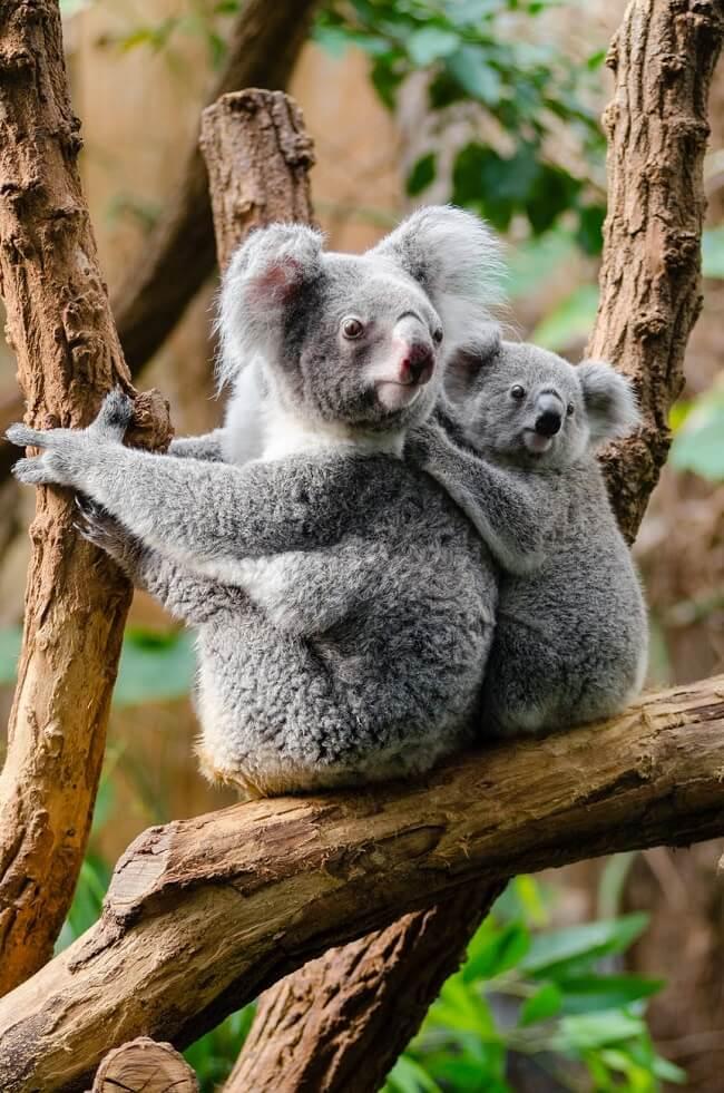 A menudo, los valores del bienestar animal en los ODS son ignorados. Para lograr un desarrollo sostenible que funcione tanto para las personas como para el planeta, las iniciativas de desarrollo intergubernamental deben reconocer la relevancia del bienestar animal en los ODS.