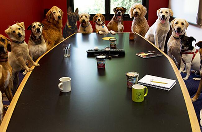 Cómo ser una oficina Pet Friendly puede mejorar tu empresa