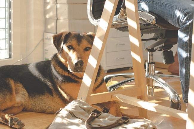 Ser una oficina Pet Friendly puede disminuir la rotación de personal