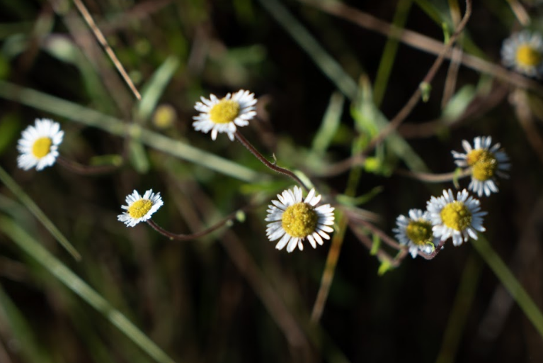 Flora en bosque de toks