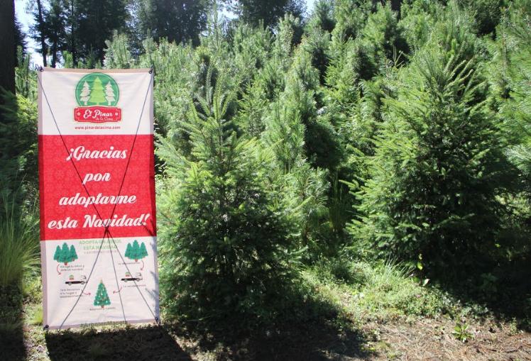 El pinar de la Cima y Bosque toks