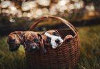 8 tips para el cuidado de mascotas amigable con el planeta