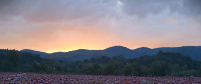 Sustentabilidad en la industria de los cultivos: caso Gaia Herbs