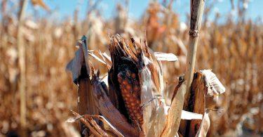 Cambio climático pone en peligro a nuestros alimentos