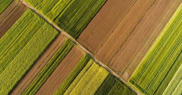 El futuro de la agricultura sostenible