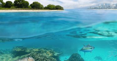 Lo que tienes que saber del Informe especial del IPCC sobre cambio climático y los océanos
