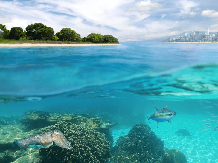 Discurso pesimista ante la crisis climática, Lo que tienes que saber del Informe especial del IPCC sobre cambio climático y los océanos