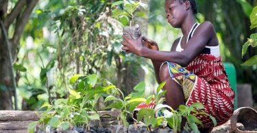 Puede una app erradicar la pobreza en la cadena de suministro de cacao