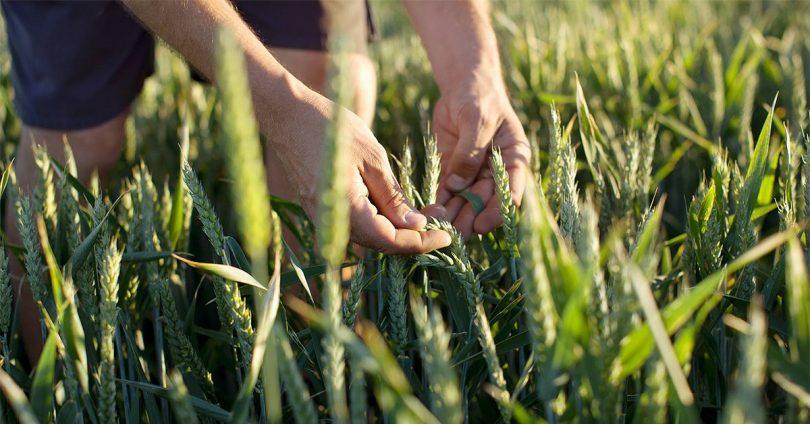 Bayer se compromete a dar forma a un sistema alimentario más sostenible