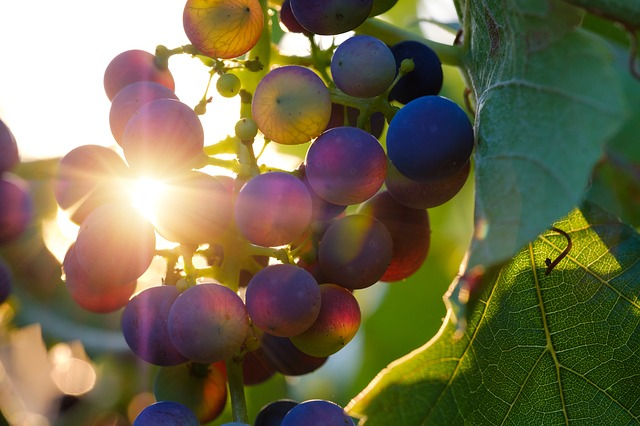 vino sustentables