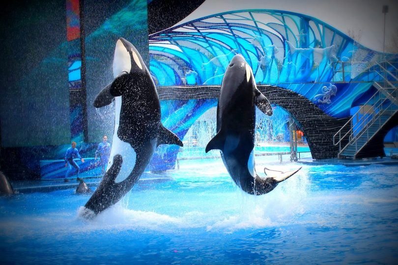 SeaWorld Blackfish