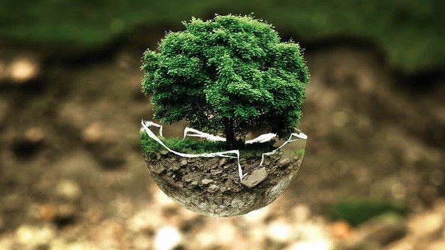 Árbol. Pacto Mundial lanza herramienta para mejorar la cadena de valor