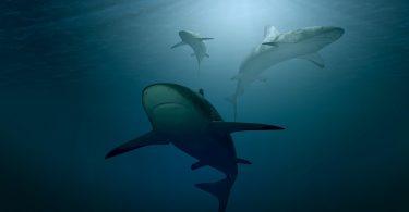 Tiburones. Lucha contra los plasticos.