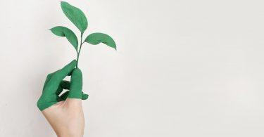 Mano con planta. 3 tendencias en energía y sustentabilidad para 2020