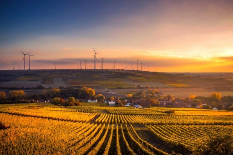 Campos agrícolas. Tendencias de consumo que ayudarán a comunicadores en 2020