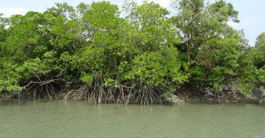 Manglares. México está destruyendo manglares protegidos para construir refinería, señalan