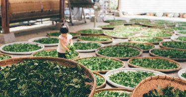 Crecen los casos de trabajo infantil en la cadena de suministro de cocoa