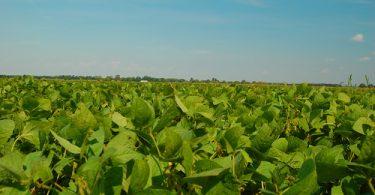 El proveedor de comida más grande del planeta promete reducir emisiones en 25%