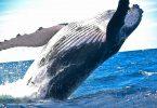 Los océanos pueden volver a ser como eran reporte científico