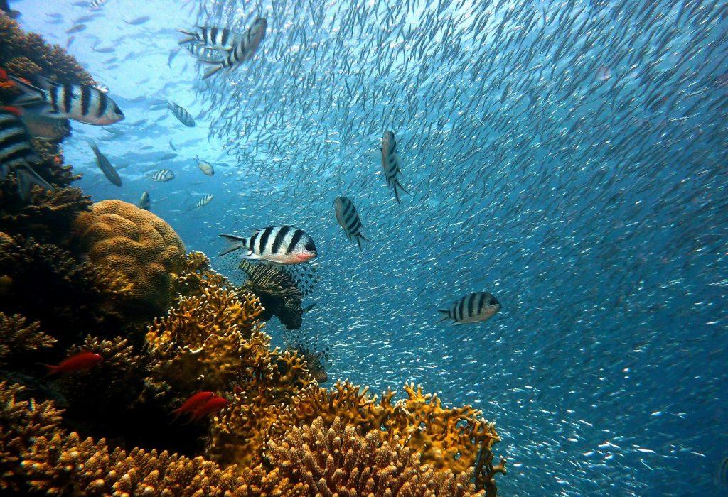 Los océanos pueden volver a ser como eran reporte científico.