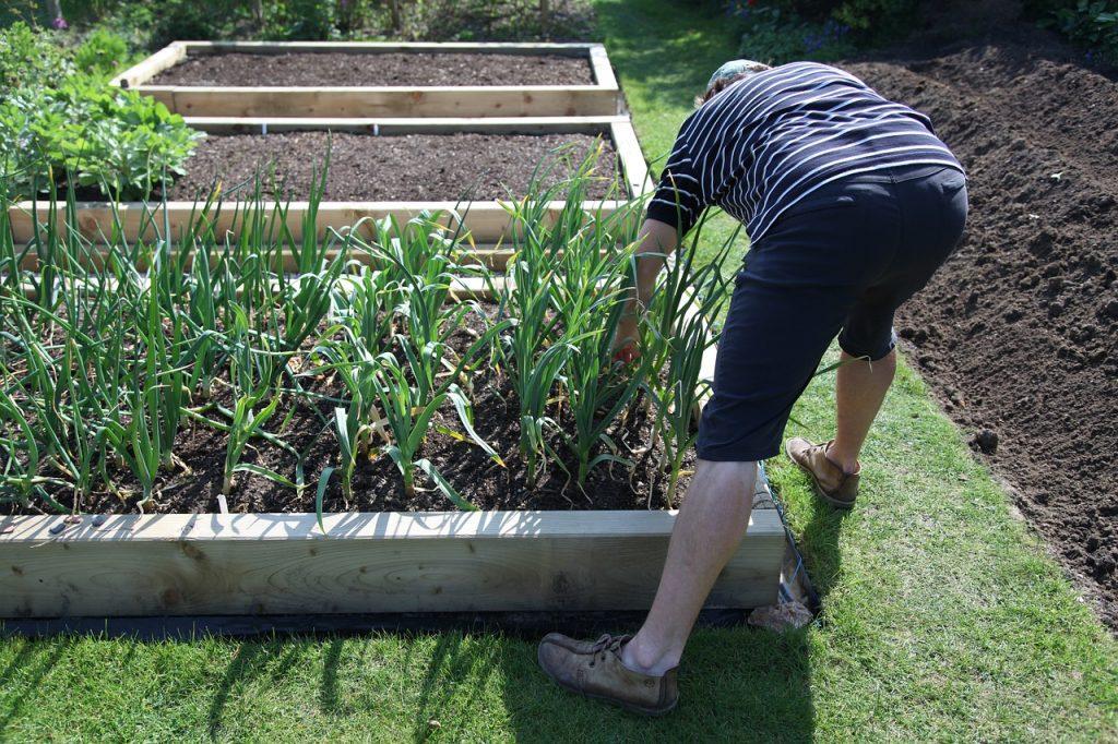 Jardinero. ¿Y si plantas un jardín casero durante el confinamiento?