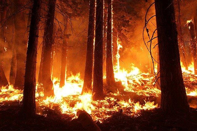 incendi. Para plantar un trillón de árboles... se usarían drones
