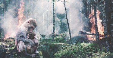 Las pandemias que estamos viviendo son consecuencia de la destrucción del entorno: OMS / ONU