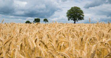 AB InBev soporta a agricultores durante la pandemia