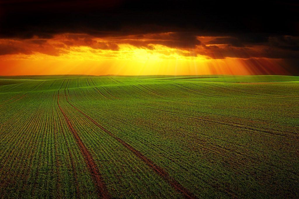 Bayer hace de la captación de carbono la nueva oportunidad en la agricultura