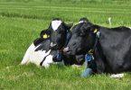 """¿Serán las vacas el nuevo """"carbón""""?"""