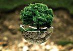 Planeta. P&G será carbono neutral en 10 años... naturalmente