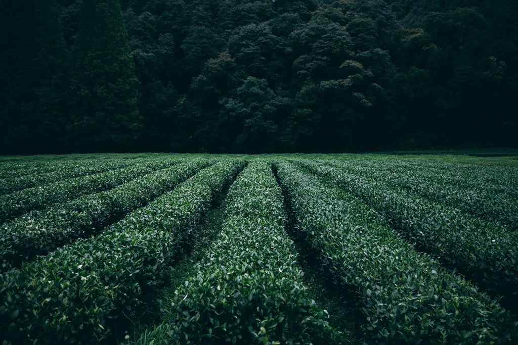 Agricultura corporativa sustentable, un nuevo horizonte