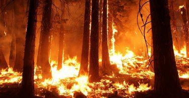 La ola de calor en California está causando... apagones