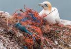 La ola de plástico en el océano podría ser más grande de lo pensado