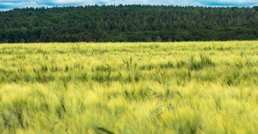 Nuestra forma de alimentación y la deforestación, causas de los nuevas enfermedades