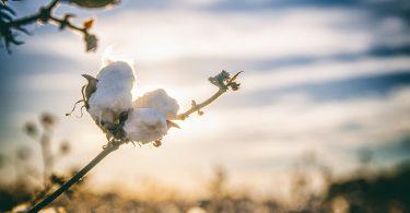 Tu próxima Polo podría ser sustentable. Ralph Lauren invierte en reciclado de fibras naturales.