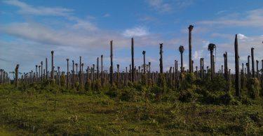 ¿De verdad existe el aceite de Palma sostenible?