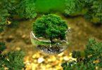 Lanzan 1er fondo de inversión a gran escala para conservación y restauración de la naturaleza